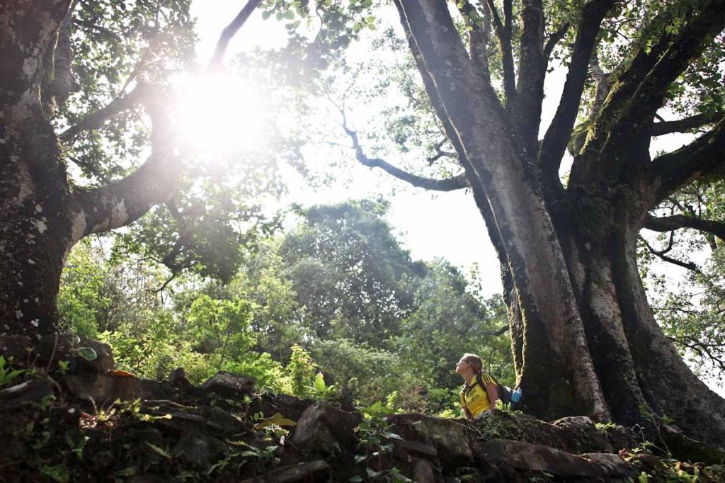 Vsako večje drevo je in še vedno služi kot postojanka na dolgih trgovskih poteh iz ene vasi v drugo.