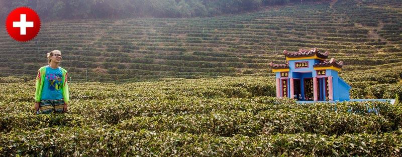 Trekking na Tajskem je lahko tudi neturističen. Če greste sami v Mae Salong, se sprehajate med čajnimi plantažami, gorskimi vasicami in spoznavate različna plemena.