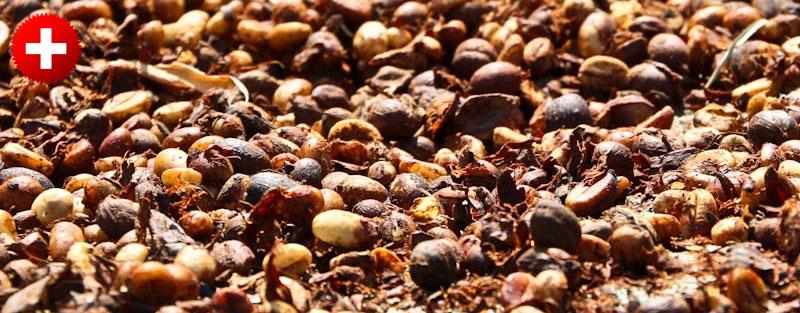 Pražena kavna semena, ki dišijo po celem Floresu. Indonezija.