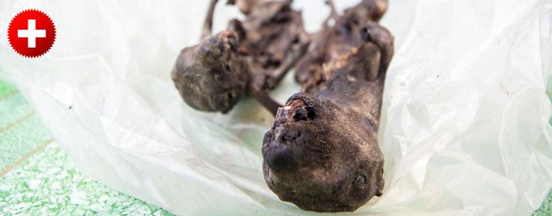 Pečene podgane so samo ena izmed bizarnih stvari, ki jih najdeš na tržnici v Chiang Khongu, Laos.