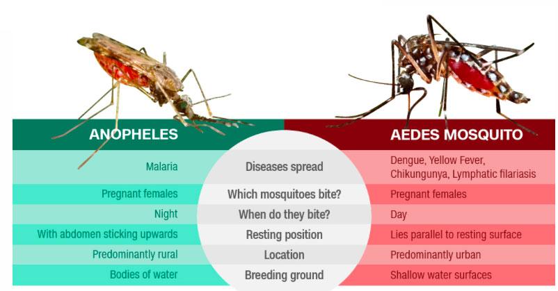 denga-malarija