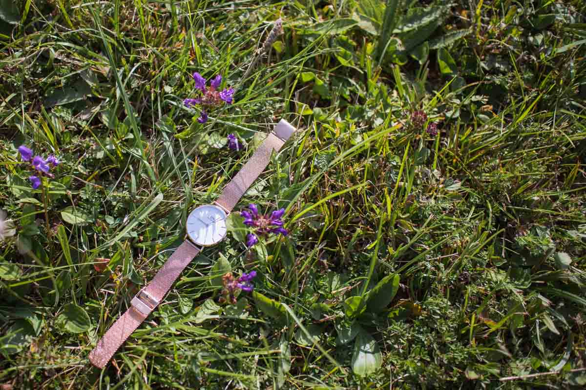 Daniel Wellington Melrose Petite in nature.