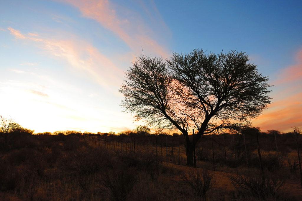 Kgalagadi, Južna Afrika