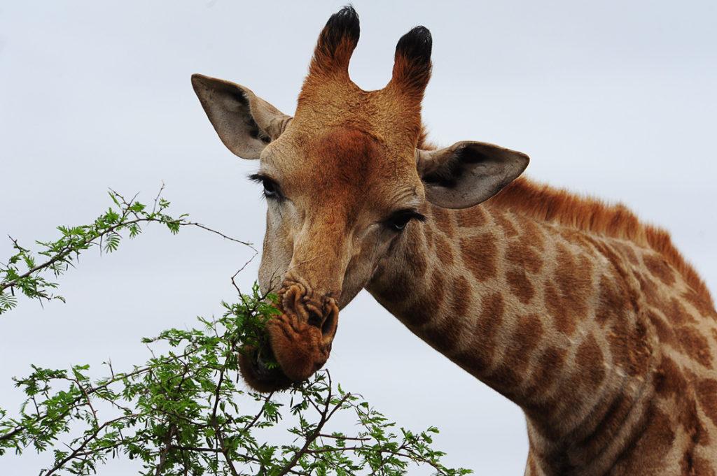 Park Krueger, Južna Afrika