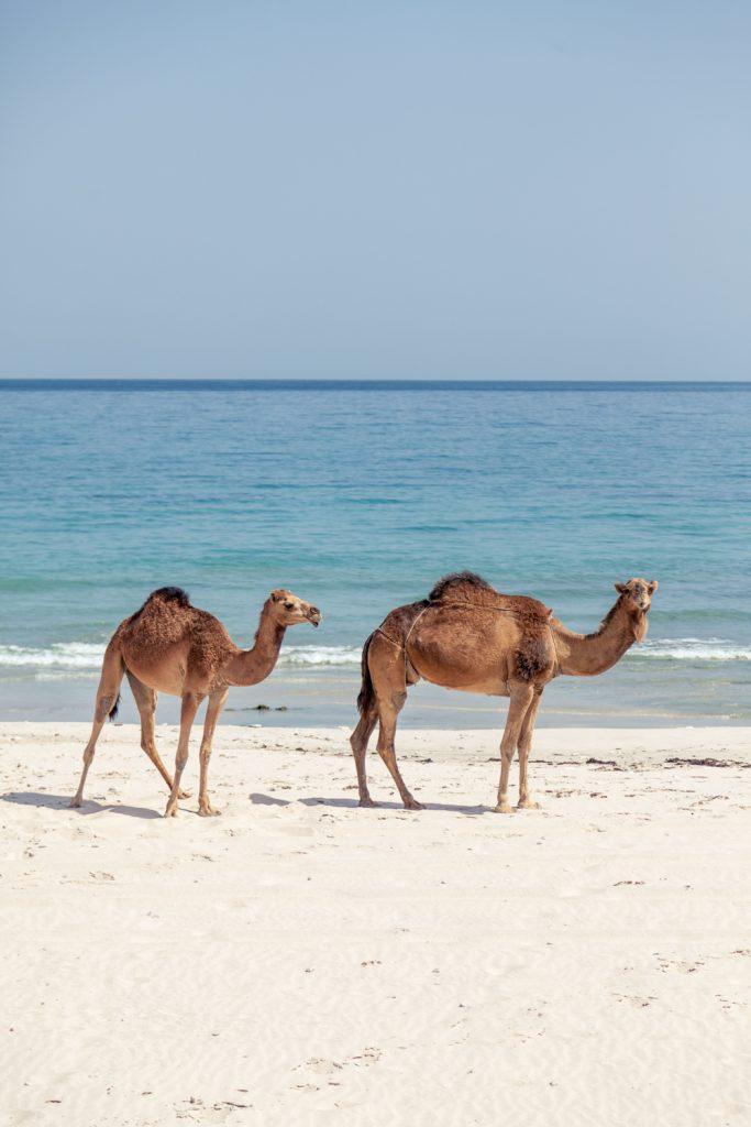 Na jug Omana.